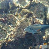 голубая рыбка :: youry