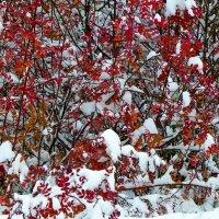 Вот такая наша осень.... :: Светлана Игнатьева
