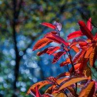 Осенний этюд :: Евгения
