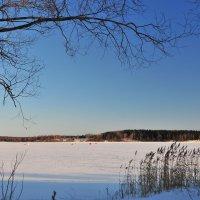 Зимний морозный день :: Андрей Куприянов