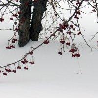 Ягоды на снегу! :: раиса Орловская