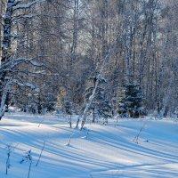 Тянутся тени по белому снегу... :: Татьяна Аистова