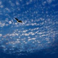 Парит орёл в небесной синеве.... :: Анатолий Клепешнёв