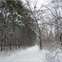 Зимние мотивы...2 :: Тамара (st.tamara)