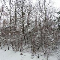Зимние мотивы...3 :: Тамара (st.tamara)