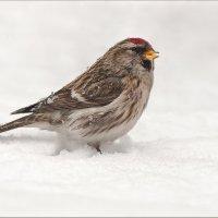 Что мне снег, что мне дождь... :: Анна Солисия Голубева