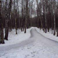 Продолжение не цветной зимы - IMG_0552 :: Андрей Лукьянов