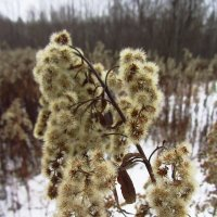 Цветы не цветной зимы - IMG_0560 :: Андрей Лукьянов