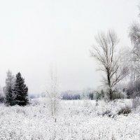 Первый снег :: Алексей Дмитриев