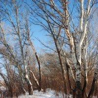 зимняя тропинка :: Валерия Шамсутдинова