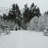 моя лыжня :: Михаил Жуковский
