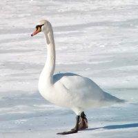 По тонкому льду! :: Наталья