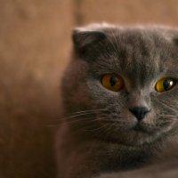 Моя Кошка :: Viktor