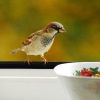 заинтересованность :: linnud