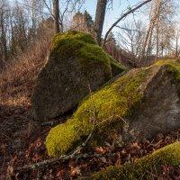 Камни в лесу :: Игорь Вишняков