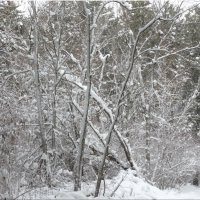 Зимние мотивы...5 :: Тамара (st.tamara)