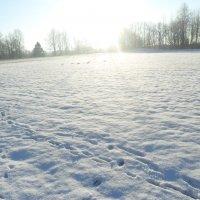 Зимний пейзаж :: ludmila Varum