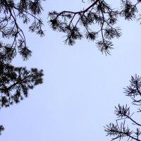 Ветки на фоне неба. Автор Натан. :: Фотогруппа Весна.