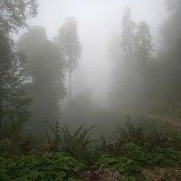 Там за туманами :: Alexander Varykhanov