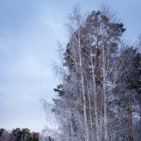 Морозное утро. :: Надежда