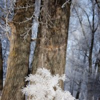 Заколдован невидимкой, дремлет лес под сказку сна... :: Наталья Костенко
