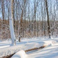 Зима в лесу :: Анна :)