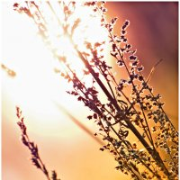 солнце :: Ольга Степанова