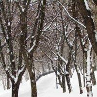 Красково, снег :: Ирина
