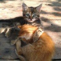 Котята :: Валерия Кратенко