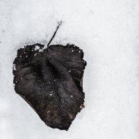 однако зима :: Аркадий Алямовский