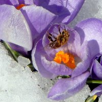 Весна. :: Hаталья Беклова