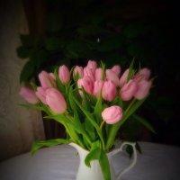 Тюльпаны :: Мария Корнилова