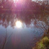 Солнце в озере :: ЕЛЕНА СОКОЛЬНИКОВА