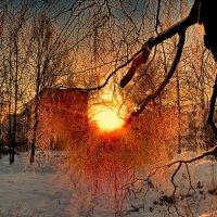 солнечный зайчик... :: Ольга Cоломатина