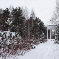 Зима в парке :: Виктория