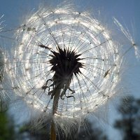 В вихре солнечного света! :: Наталья