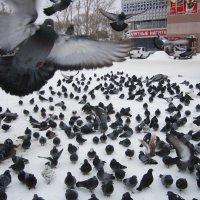 Голуби , посланники ангелов . :: Мила Бовкун