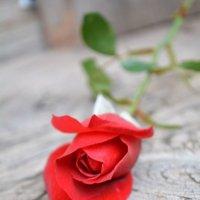 Сломленная роза :: Оксана Провоторова