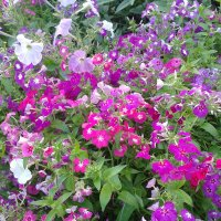 Разноцветье :: Валерия Кратенко