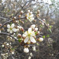 Весна :: Валерия Кратенко