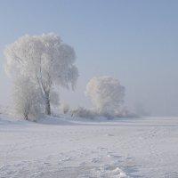 Морозно :: Владимир