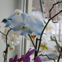 Цветы не подоконнике... :: novik Юрий Новиков