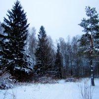 Зимний лес :: Катя Бокова