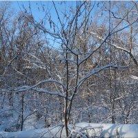 Ясный зимний день... :: Тамара (st.tamara)