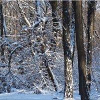 Ясный зимний день...2 :: Тамара (st.tamara)
