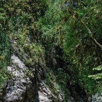 живописные скалы :: Galina