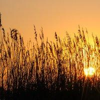 оранжевое небо, оранжевое солнце :: Galina