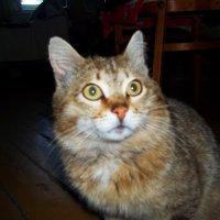 Удивлённо-испуганный кот :: Владимир Ростовский