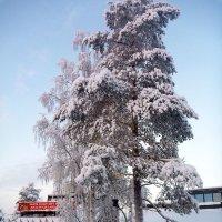Все в снегу :: Лариса Корженевская