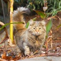 Кошка в джунглях :: Максим Миронов